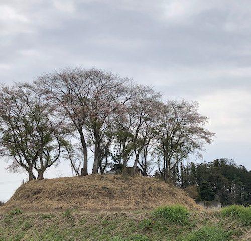 直ぐ近くの円墳の桜が満開です!!