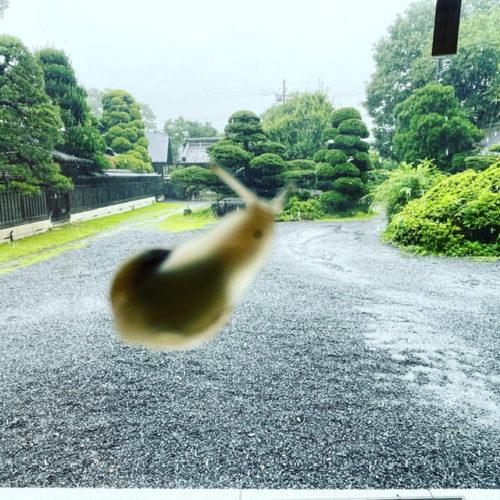 梅雨明け!